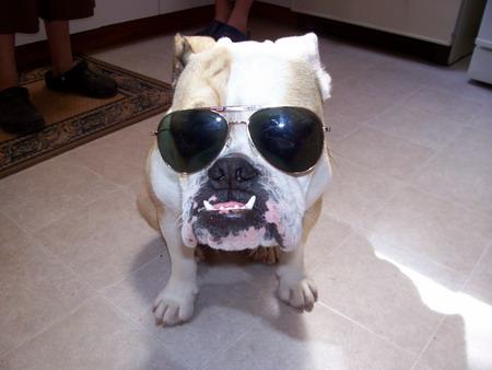 bulldog-880.jpg