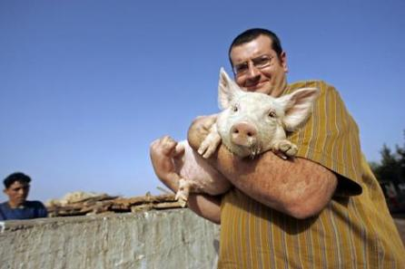 moroccan-pig-farm.jpg
