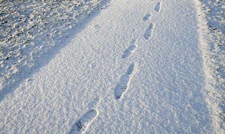footprint3_463422a